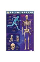 Poster recto verso/le squelette